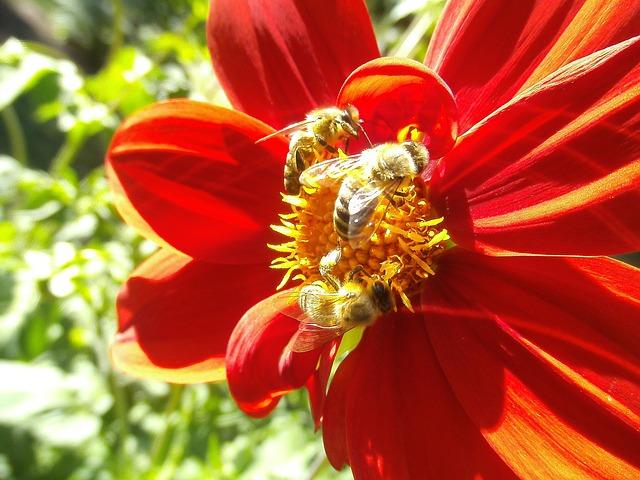 honeybee-957790_640